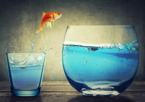 fish jumping from smaller to larger water bowl