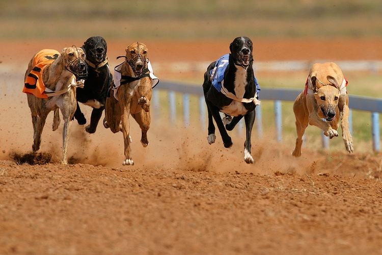 Greyhound Racing Back in Oxford
